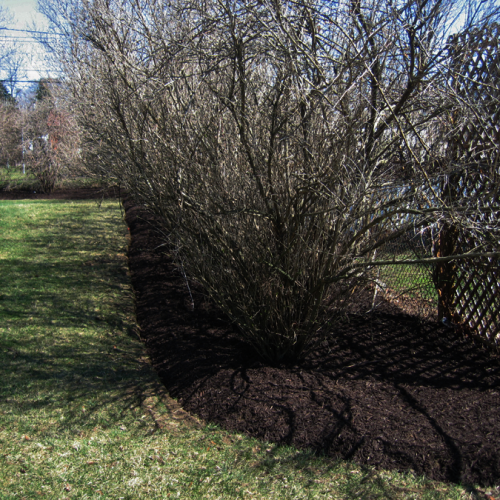 A picture of a bed edged flower bed where fresh black mulch was installed