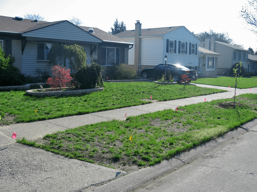 A Picture Of A Weed And Disease Riddled Lawn