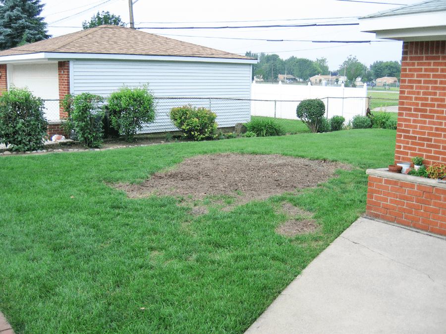 A Picture Of A Bare Area Where A Tree Was Cut Down Ready For Sod