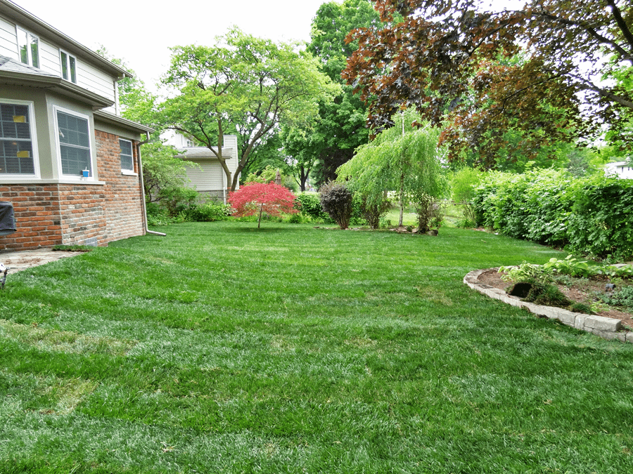 The After Picture Of Freshly Installed Sod On Property