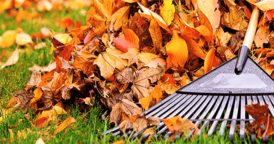 This is an image of a rake and leaves